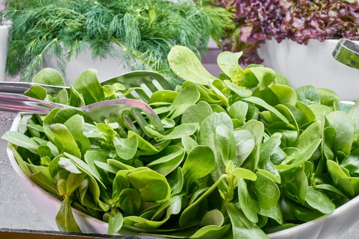 What to eat during pregnancy in the third trimester vitamin k leafy greens